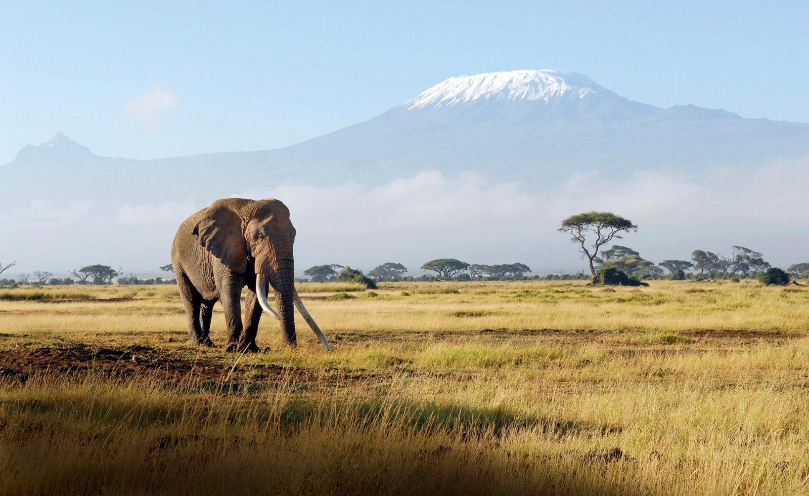Elefant med Kilimanjaro i bakgrunden